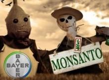 bayer-monsanto-220x162